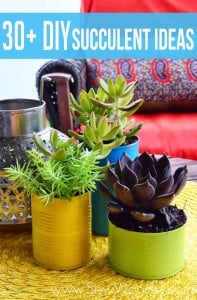30+ DIY Succulent Ideas from SewWoodsy.com