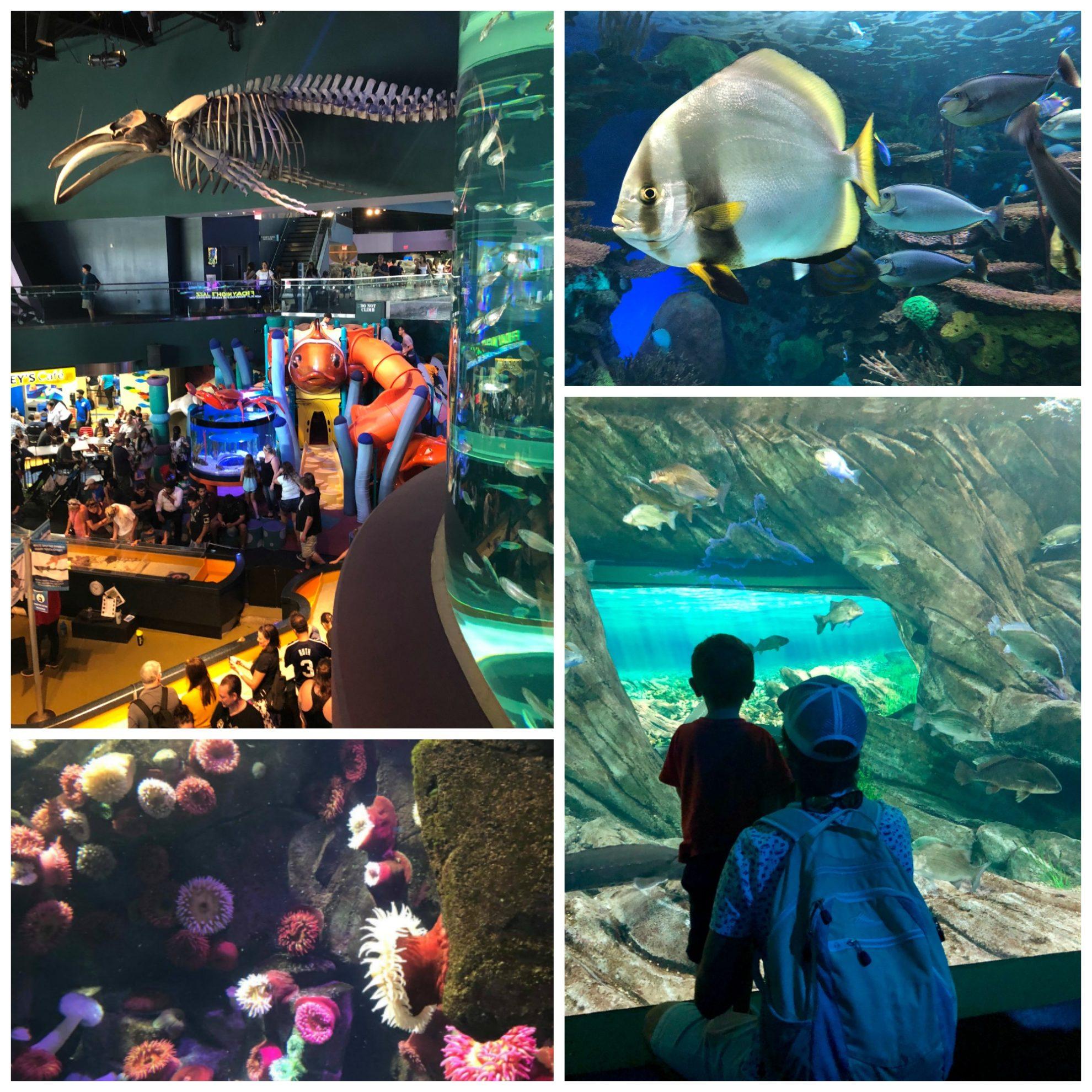 Ripleys Aquarium of Canada Kid's Play Area and Tanks